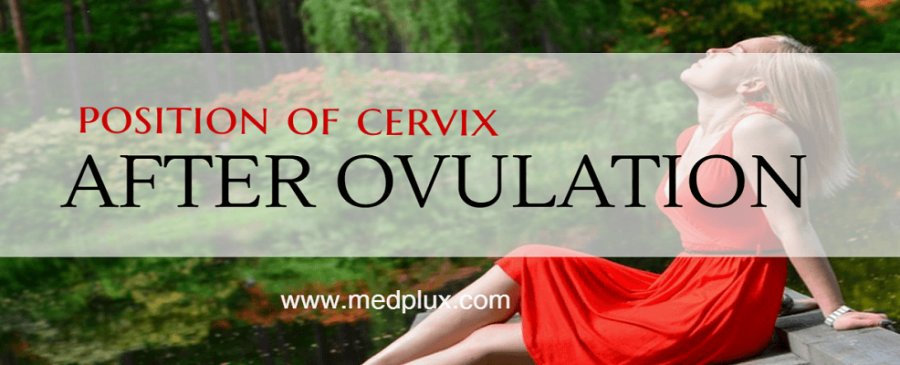 POSITION OF CERVIX AFTER OVULATION